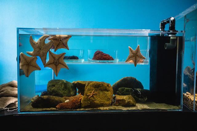 Central Coast Aquarium