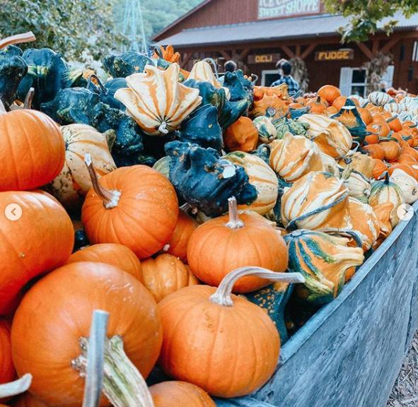October at Avila Valley Barn - Avila Beach, CA